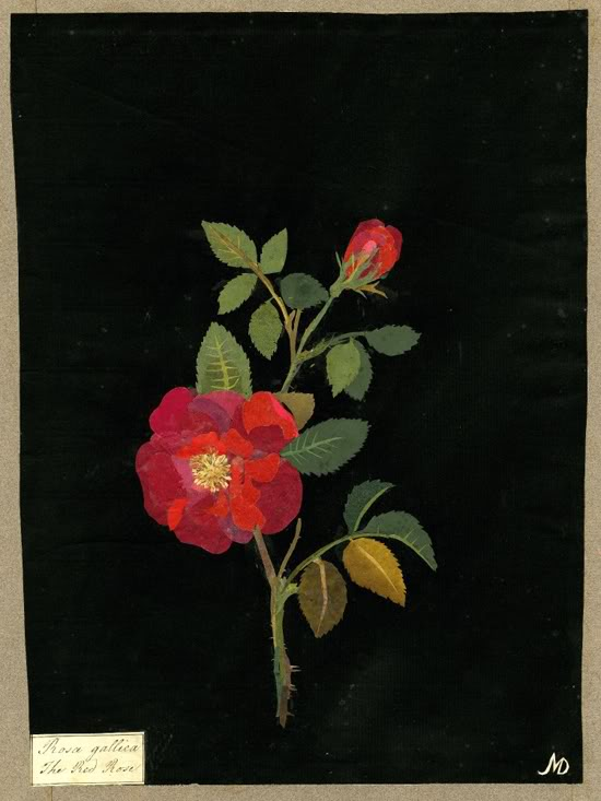 The Flowering of Mary Delany's Ingenious Mind at Debra Eve's LaterBloomer.com
