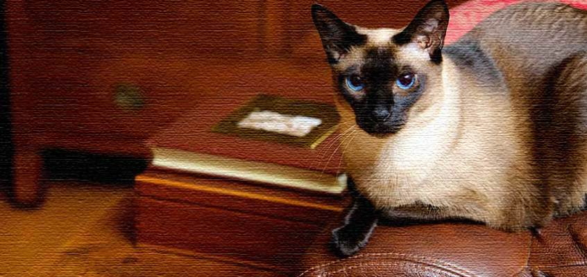 The Late Bloomer and The Cat Who Could Read Backwards